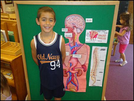 kid next to body diagram
